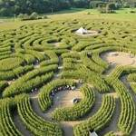 Le Labyrinthe recherche 18 artistes